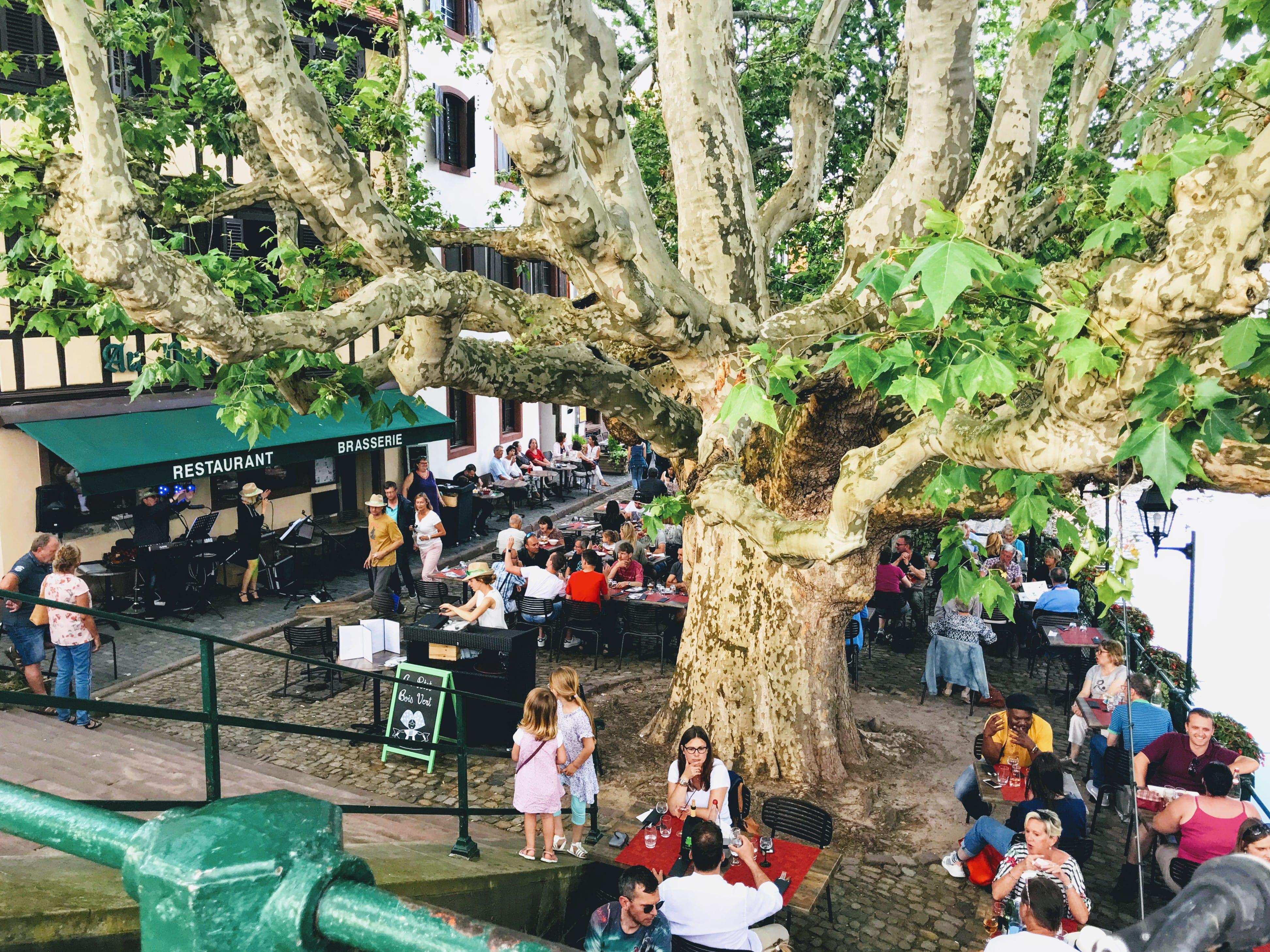 L'arbre du Petit Bois Vert, la terrasse est remplie.